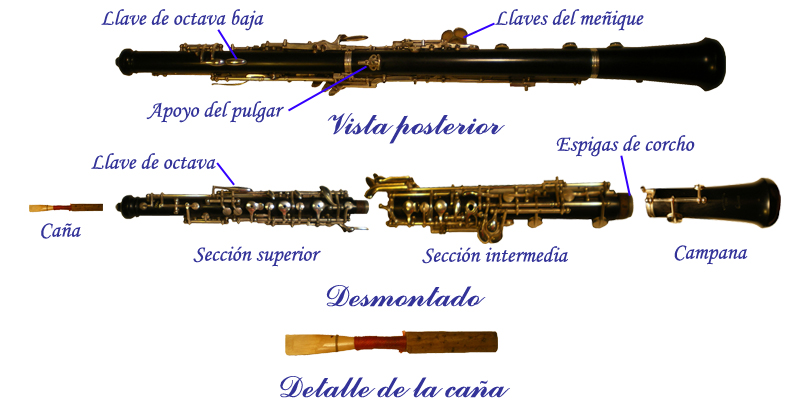 Partes de un oboe en tu tienda online musisol